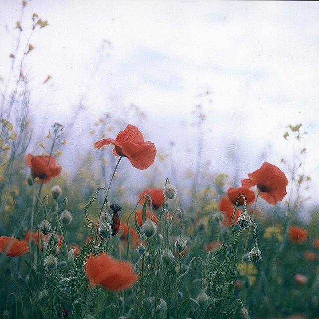 优秀摄影作品 Flors