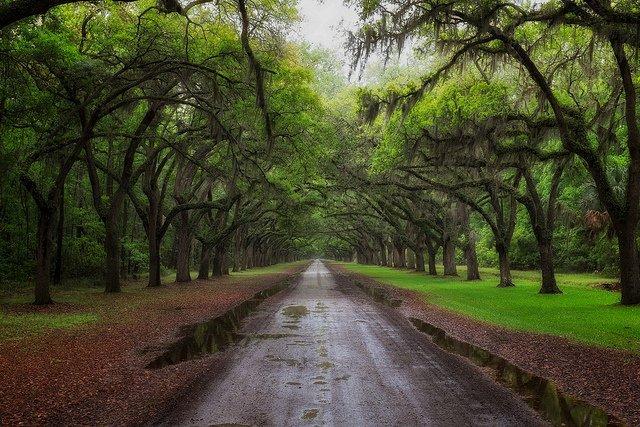 优秀摄影作品 WORMSLOE PLANTATION - DSCF0241