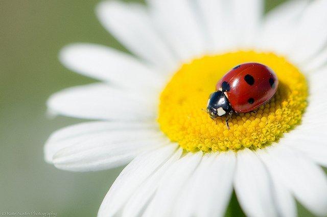 Sleepy Ladybug