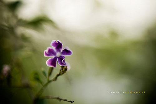 Creative photography by Daniela Romanesi