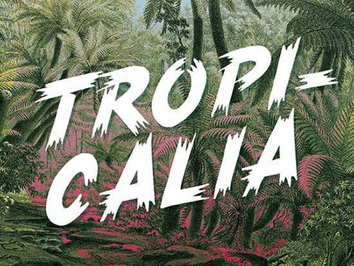 TROPICALIA-Brush-Typeface 字体下载