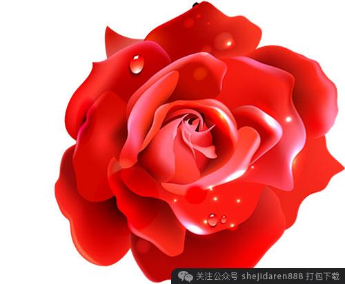 qing-ren-jie-sucai-xianhua-13
