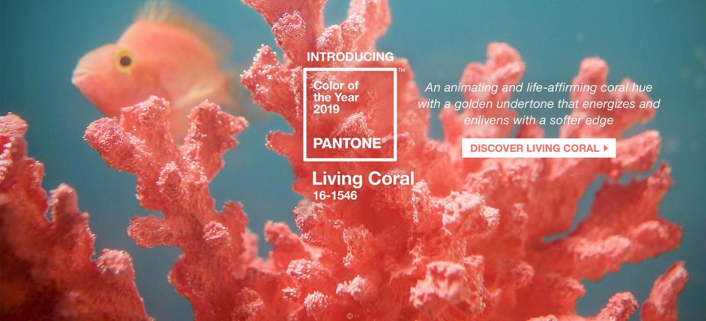 潘通2019年度代表色:珊瑚橘