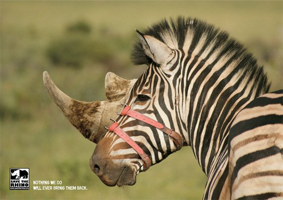 Save the Rhino: Zebra