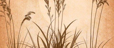 Grass Brushes