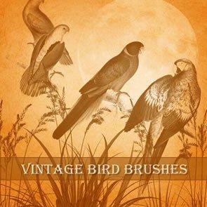 Vintage Birds 9 Brushes