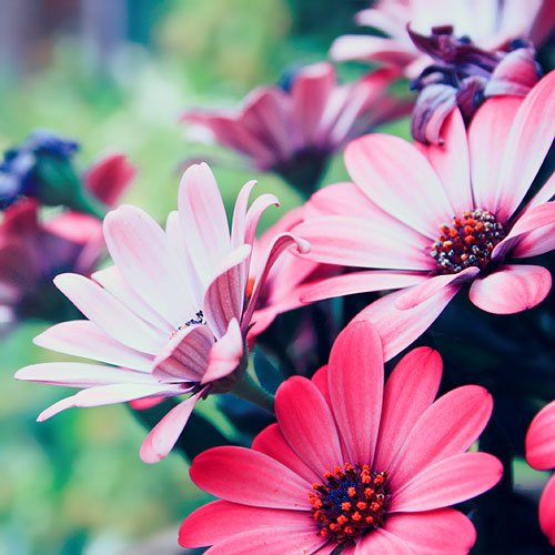 Very Nice Flower Photo