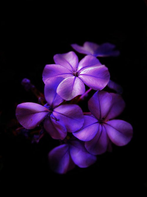 Cool Flower Photo