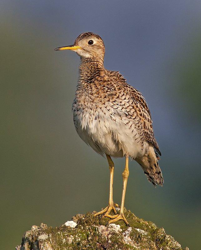 Philip Dunn摄影作品 - 鸟类摄影作品欣赏